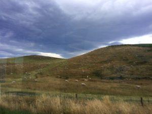 ニュージーランド風景_丘