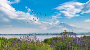 湖の上を飛ぶ鳥の群れ