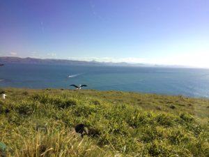 アルバトロスセンターの展望台から海を眺めた風景